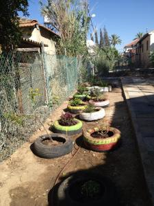 Gardens Planted in Netivot