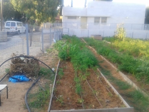 Urban Garden in Ethiopian Community