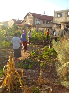 Some of the community plots at the garden