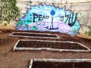 Mural and Flower Beds in Volunteer Community Garden in Druze Village
