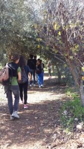 Jewish Value of Sustainability on Tu B'Shvat